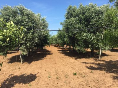 Terreno in vendita a Brindisi